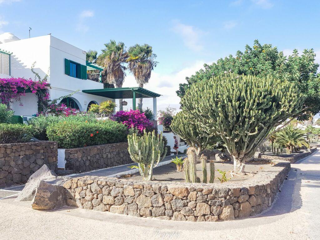 maison avec cactus à Puerto Del Carmen à lanzarote