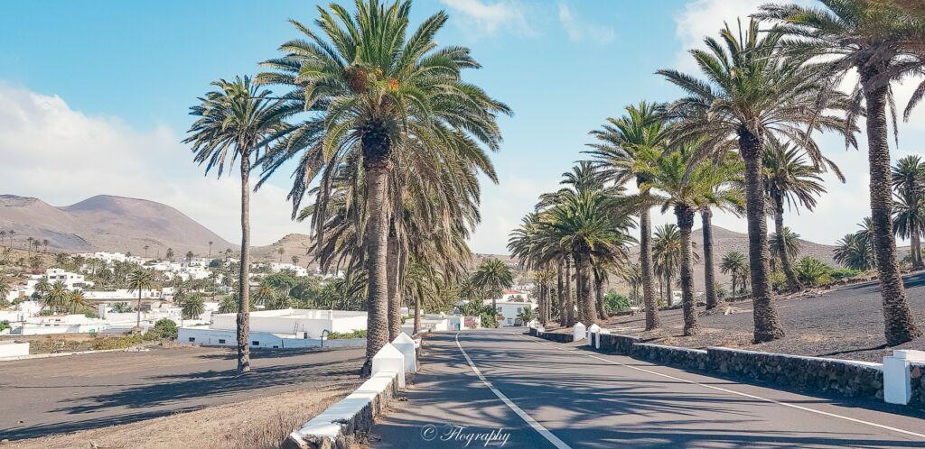 Haria avec route bordée de palmiers à Lanzarote