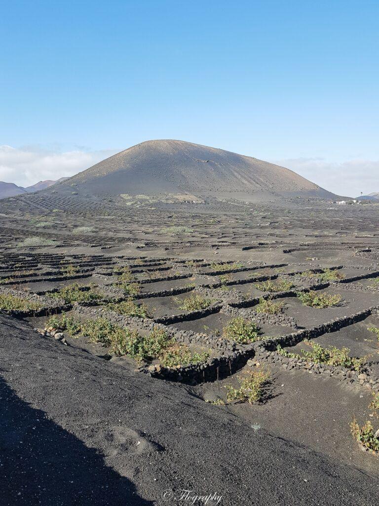 parcelle de vignes dans la roche de lave noir à la Geria à Lanzarote