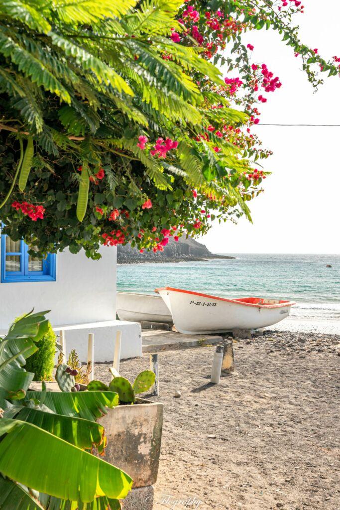 fleurs en bord de mer avec une barque de pecheur à Pozo Negro à Fuerteventura