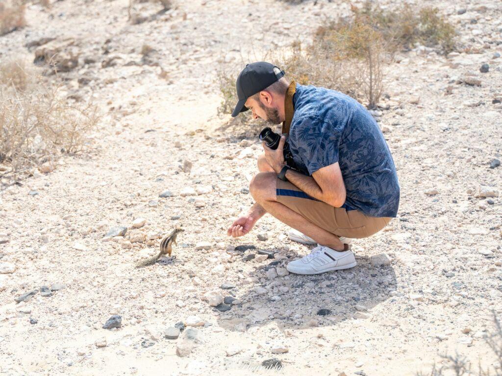 écureuil de barbarie sauvage à Fuerteventura