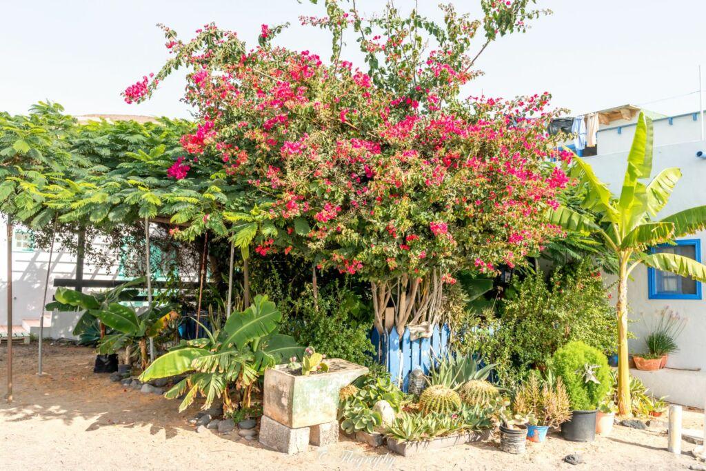un jardin d'un particulier en bord de plage de Pozo Negro à Fuerteventura