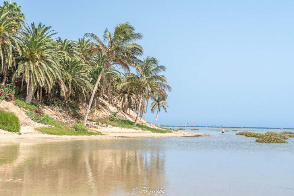 plage lagune avec des palmiers de Sotavento à Fuerteventura