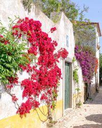 maison fleurit avec bougainvilliers à Obidos au portugal